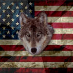 Meme - Patriotic Wolf