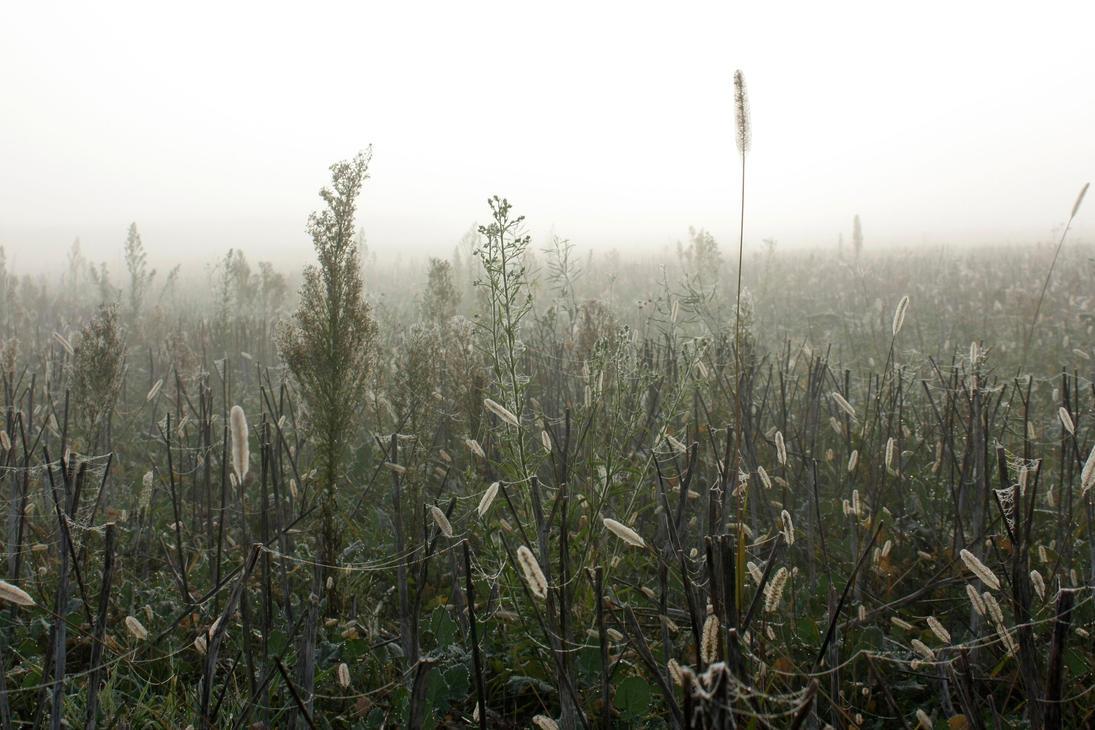 Mist - White by enkyl