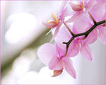 Orchids and Light by aquapell