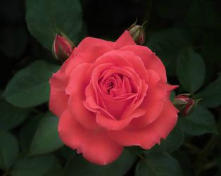 Summer Bloom by aquapell