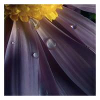 Mum's Tears II by aquapell