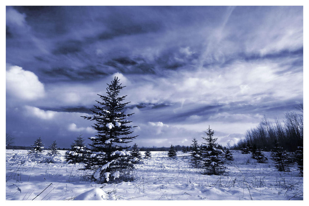 A Winter's Walk II by aquapell