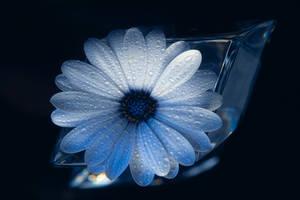 Blue by aquapell