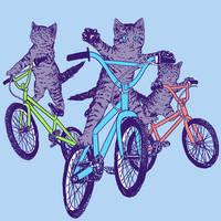 BMX Kittens by HillaryWhiteRabbit