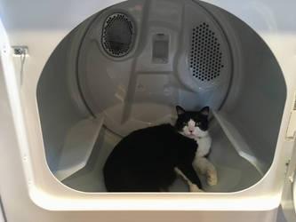 Caught in the Dryer by EmilyDfan