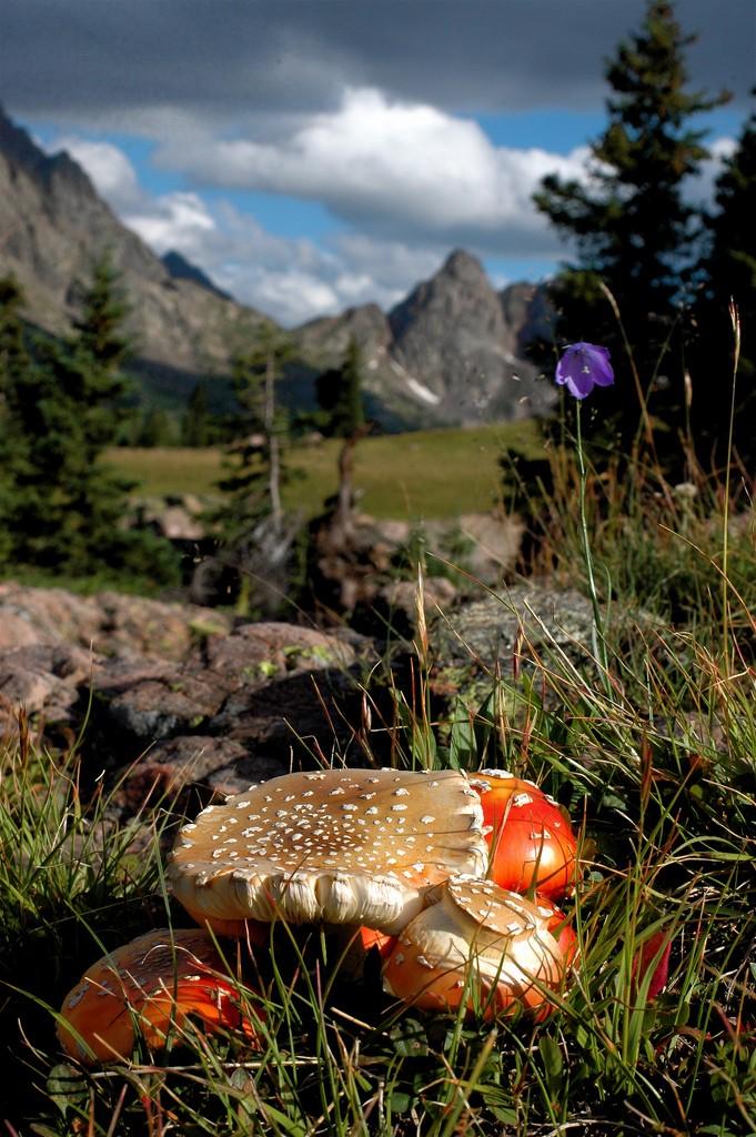 Mountain Mushroom by leocbrito