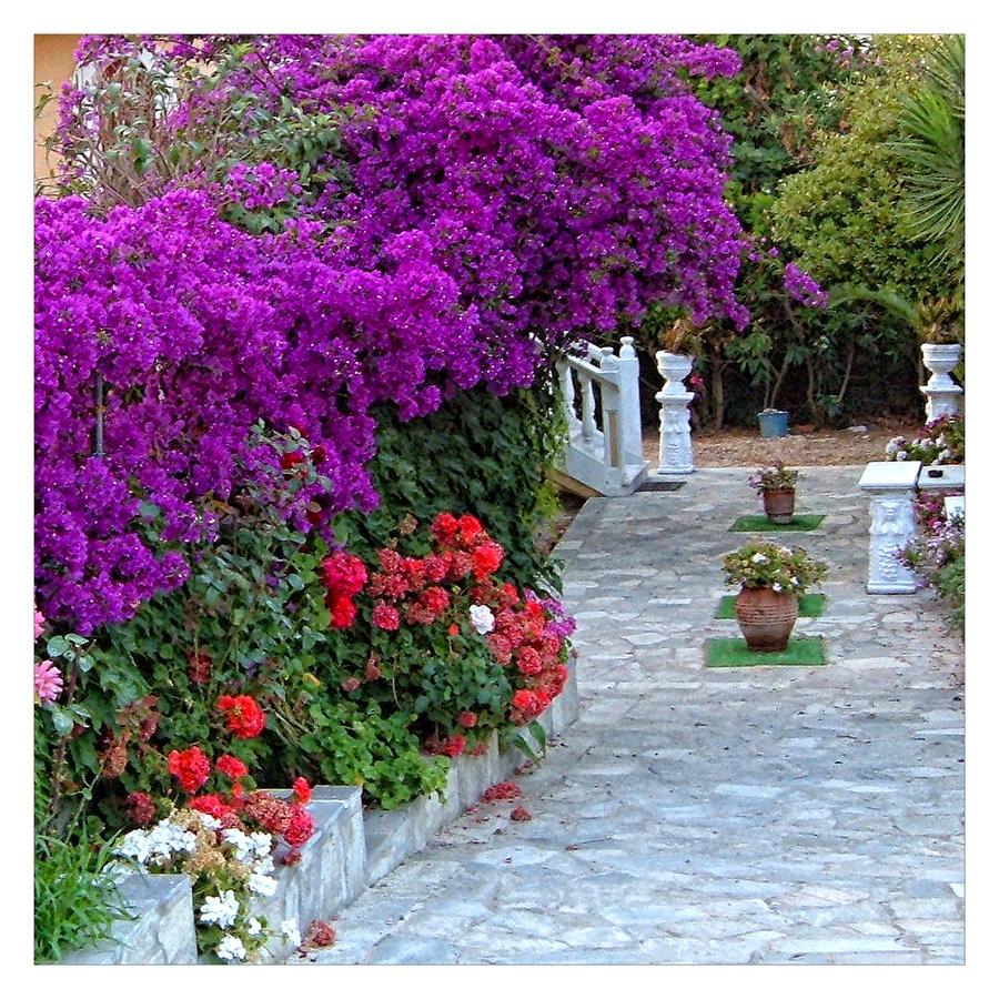 Colorful Gardens Flowers By Svitakovaeva On Deviantart