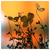 warm touch of color by SvitakovaEva