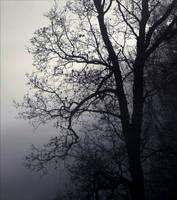 old tree by SvitakovaEva