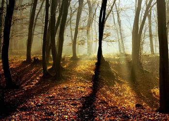 midday sun in the woods by SvitakovaEva