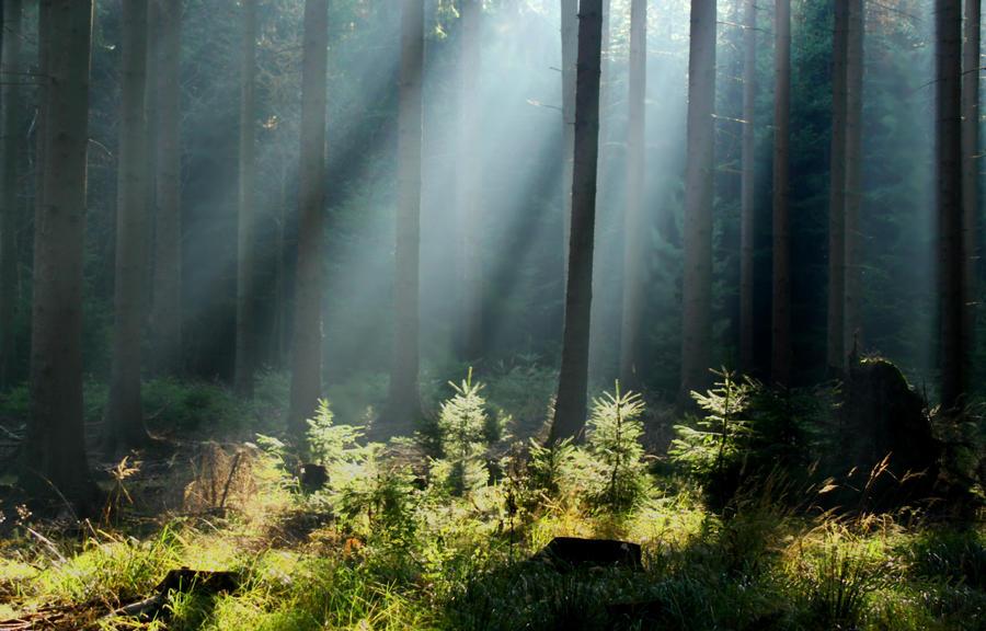 sun rays in forest by SvitakovaEva
