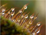 detail on the drops by SvitakovaEva