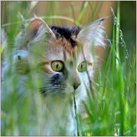 cat on the prowl by SvitakovaEva
