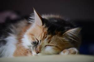 cat sleep by SvitakovaEva