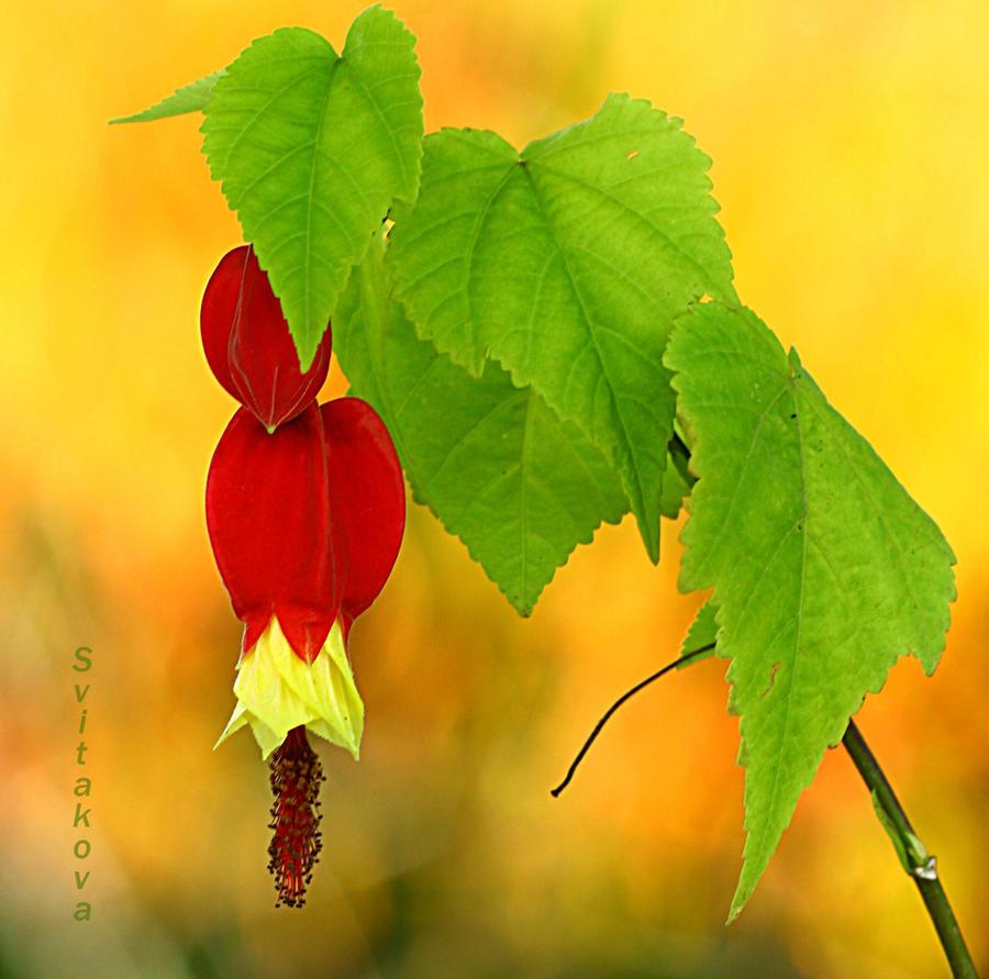 flower still life by SvitakovaEva