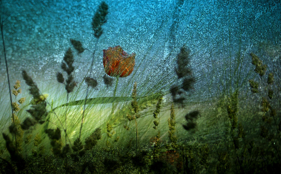 Abstract Images Of Nature