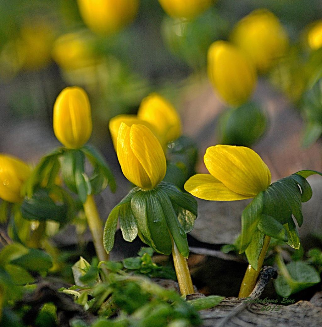 Yellow spring flowers by svitakovaeva on deviantart yellow spring flowers by svitakovaeva yellow spring flowers by svitakovaeva mightylinksfo