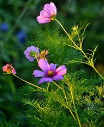 morning garden II by SvitakovaEva