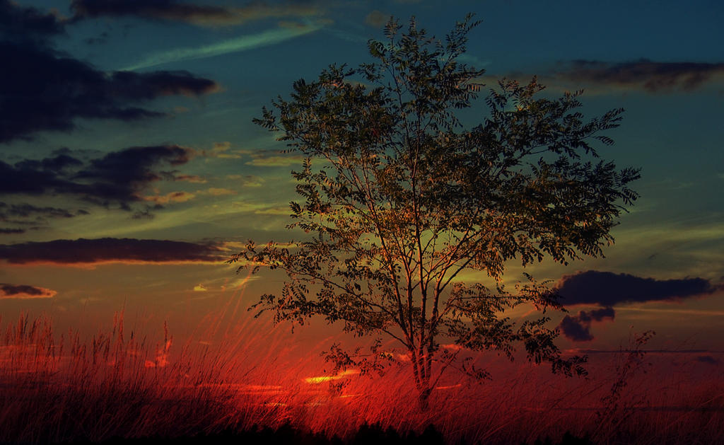 evening nature IV by SvitakovaEva