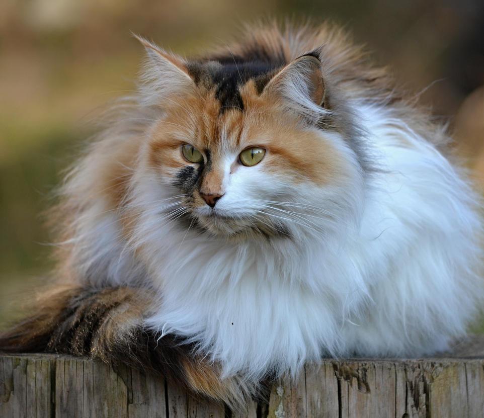 cat resting on a stump by SvitakovaEva