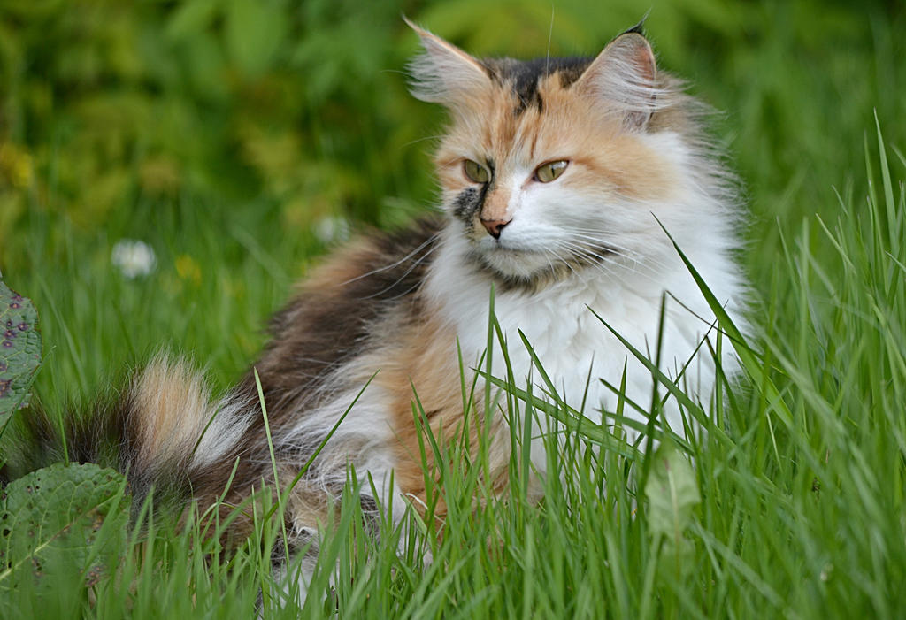 Masha in the garden -cate by SvitakovaEva
