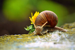 snail - Evening Walk by SvitakovaEva