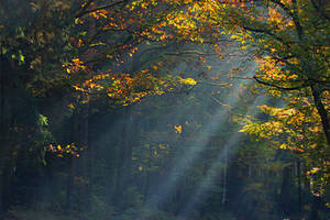 morning in the forest by SvitakovaEva