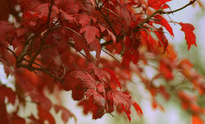 red autumn 2