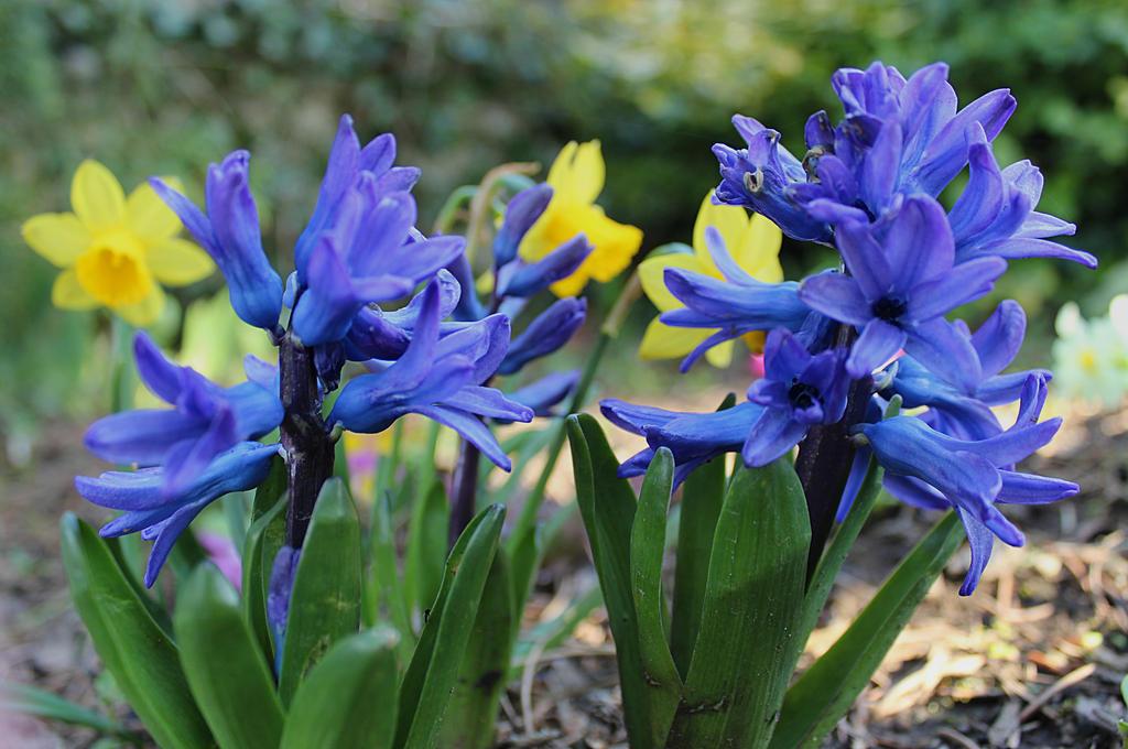 Spring flowers in the garden 3 by svitakovaeva on deviantart spring flowers in the garden 3 by svitakovaeva mightylinksfo