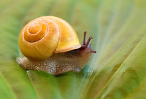 Snail on the walk 2 by SvitakovaEva