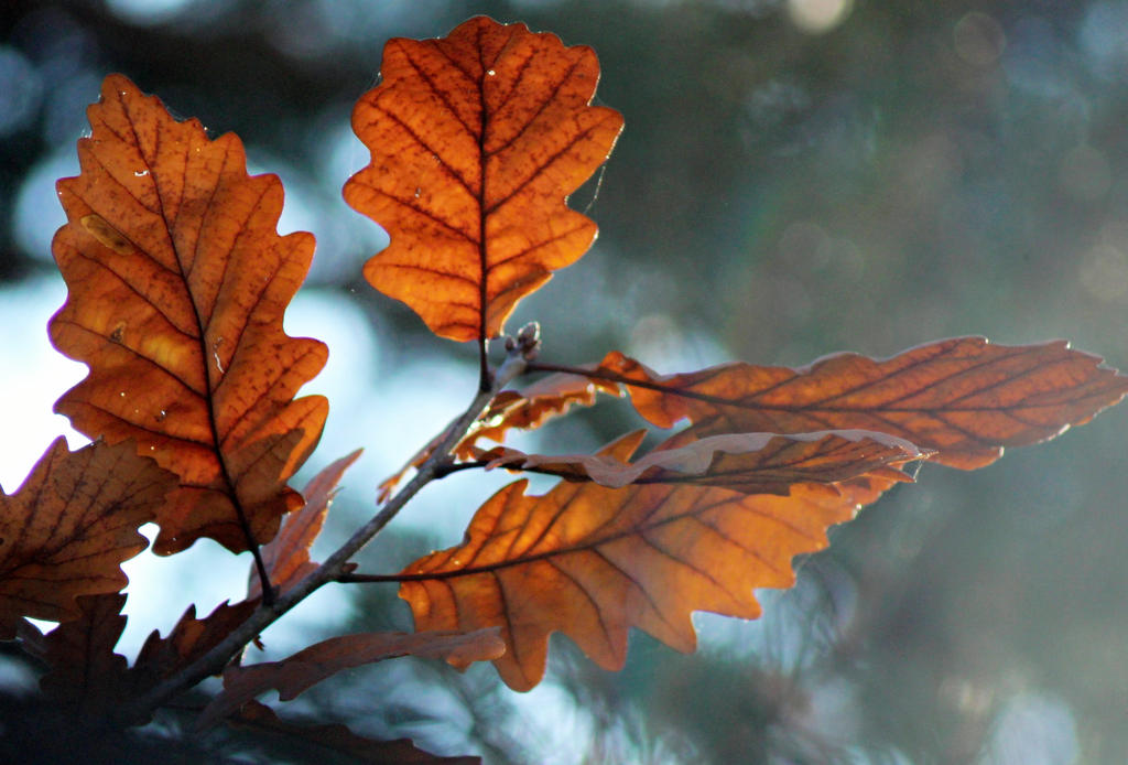 autumn image by SvitakovaEva