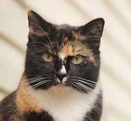 cat by SvitakovaEva