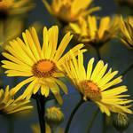 flowers in the garden 4 by SvitakovaEva