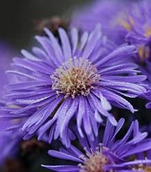 autumn flowers 5