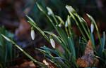 spring is slowly awakening by SvitakovaEva