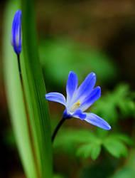 flowers by SvitakovaEva