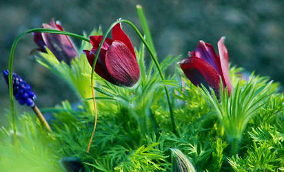 in thy garden by SvitakovaEva
