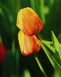 tulips by SvitakovaEva