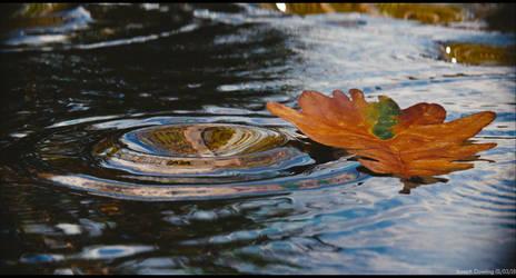 A leaf on water - Take 2