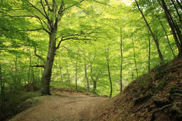 Beautiful Green by JosefineTJ