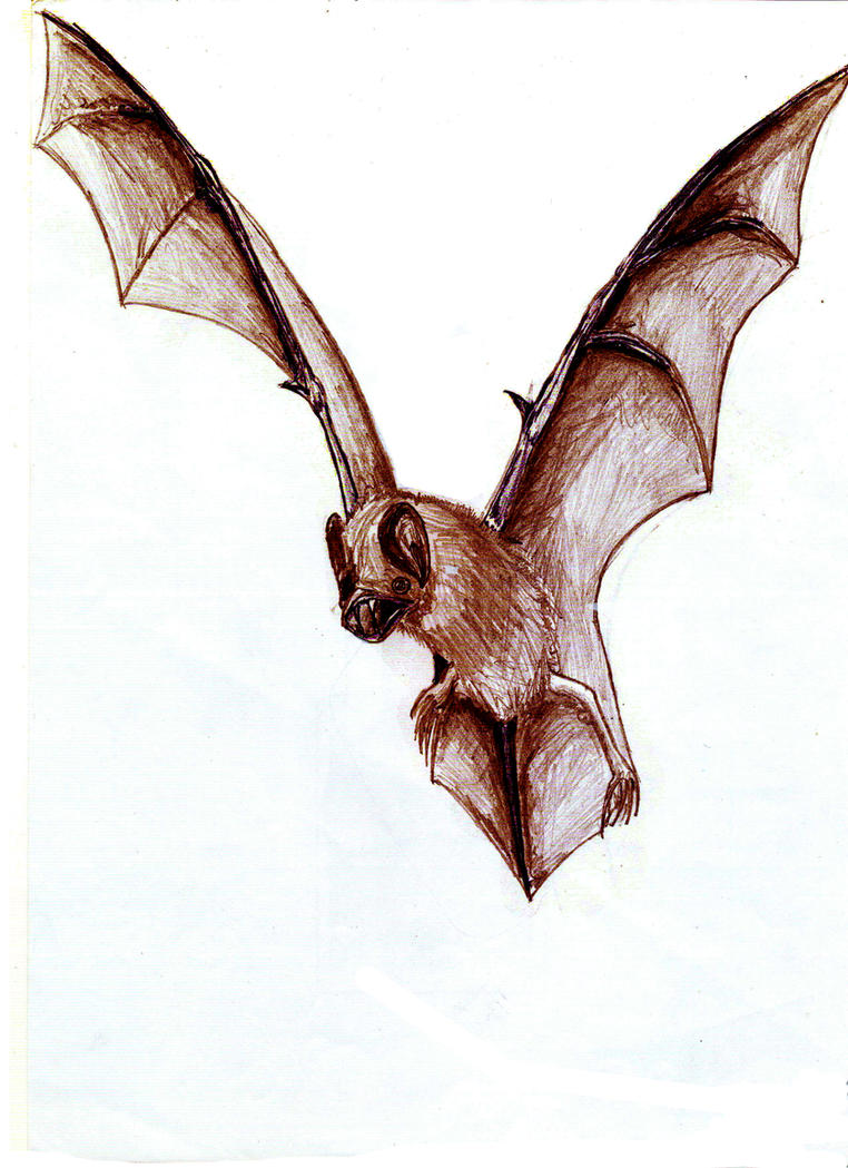 vampire bat by Lyco5 on deviantART