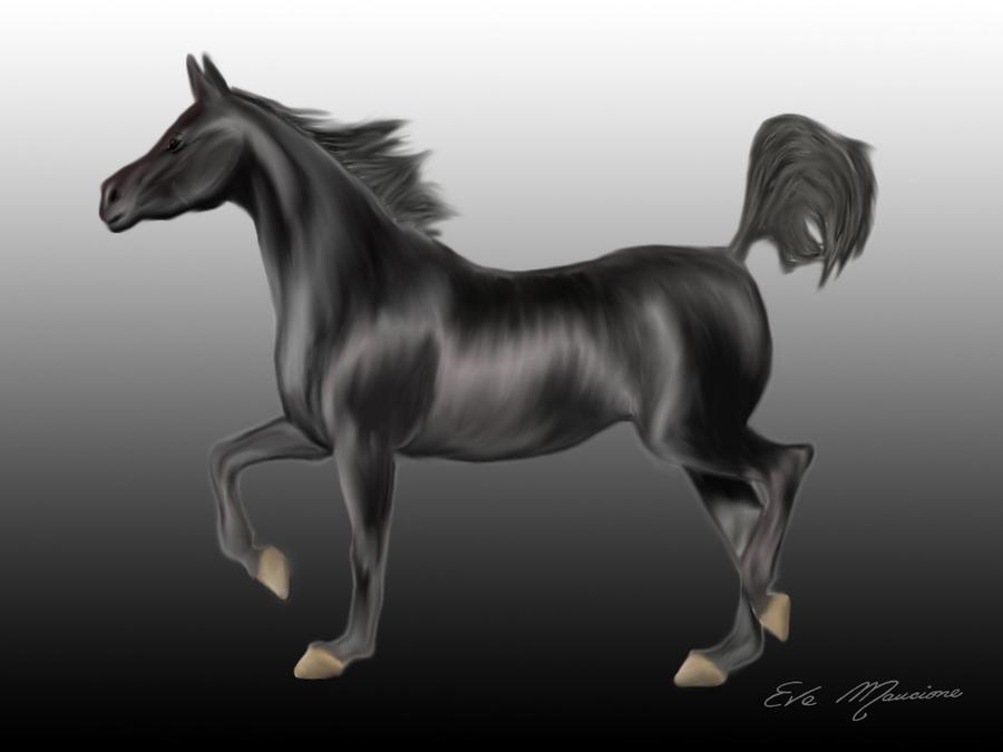 Black Horse by Evgra