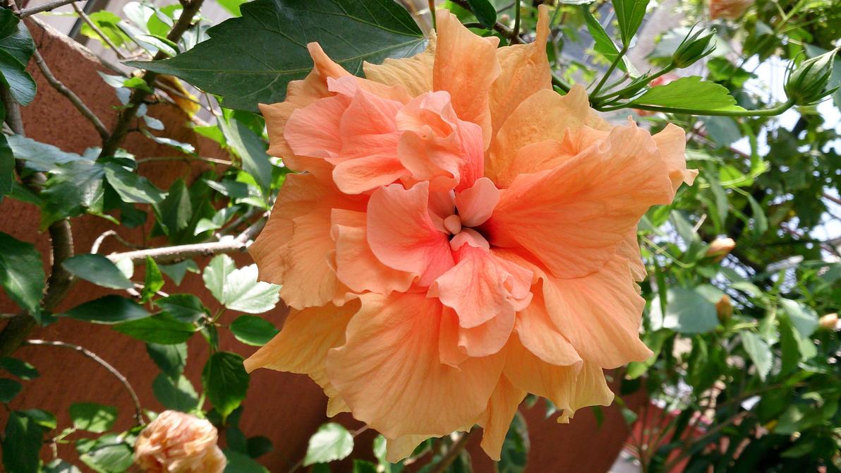 Beautiful japanese rose !! !! by danyel-i
