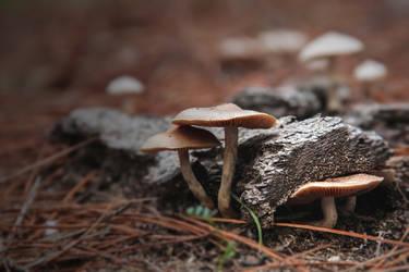 The forest floor - June fungi I by AlejandroCastillo