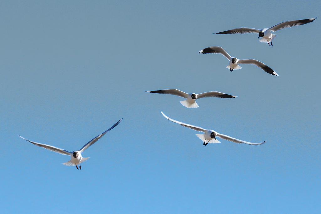 Free flight VI by AlejandroCastillo
