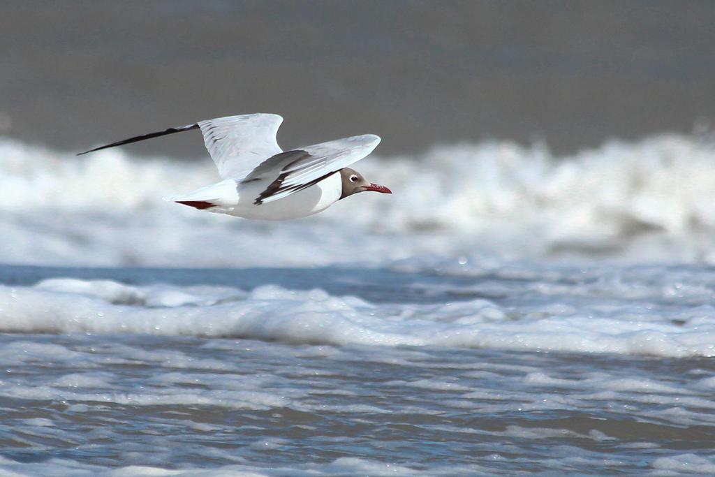 Free flight VII by AlejandroCastillo