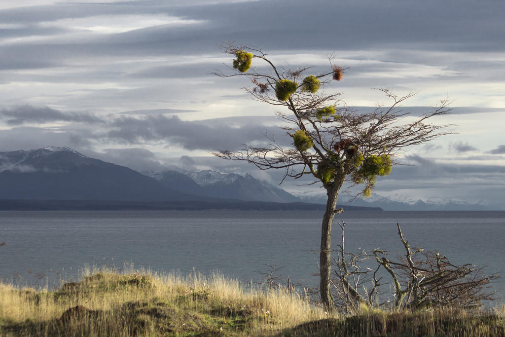 54 degrees south latitude - Fagnano lake by AlejandroCastillo