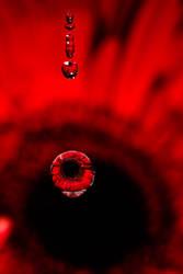 Red... drop by drop II by AlejandroCastillo