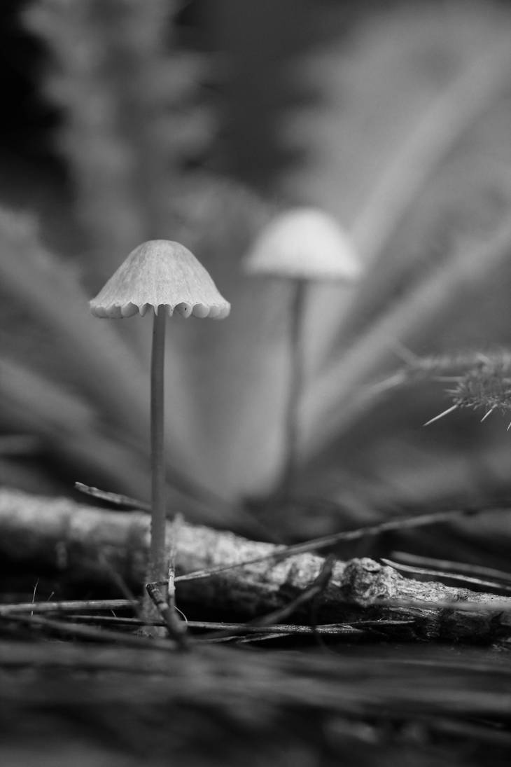 The forest floor in BW by AlejandroCastillo