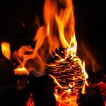 Photographic games IX - Hot pine cone